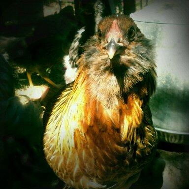 #augustbreak: Friday chicken